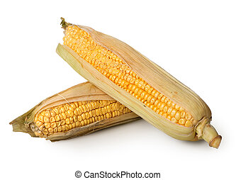 Two ears of corn isolated on a white background