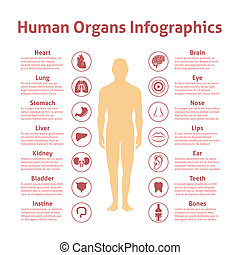 Human infographic set - Human organs icons with male figure...