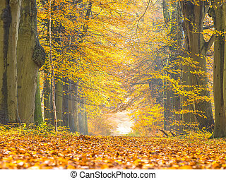 Lane with Yellow Foliage of Birch Trees during Autumn -...