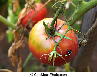 Agricultural parasites - If you look better, you\'ll see a...