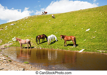 Horses near a pond in mountains