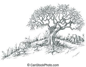 oliva, grafico, albero