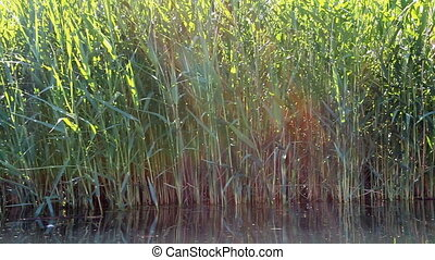 Lake grass pan with sun beams - Moving along lake or pond...
