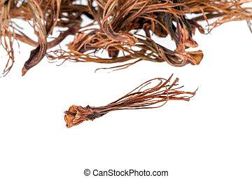 BOMBAX CEIBA LINN - dried androecium - BOMBAX CEIBA LINN -...