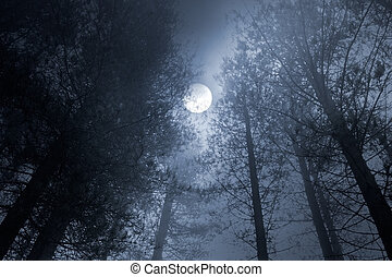 Forest full moon - Forest in a foggy full moon night