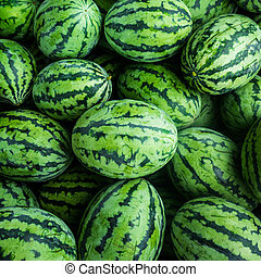 many green sweet watermelon group