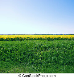 landscape with rapeseed field, yellow flowers and sky