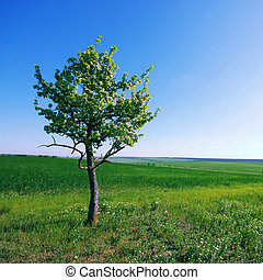 solitary tree on green grassy field and blue sky background