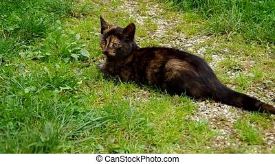 Black cat on green grass - Mottled black cat lying on green...