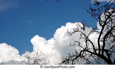 Leafless trees in autumn and the blue sky and white clouds