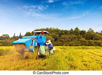 Working blue harvester
