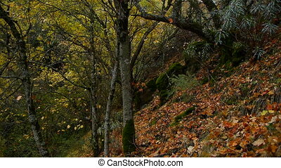 autumn corner in the forest - autumn in the forest corner of...