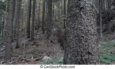 Mountain biker riding in wood