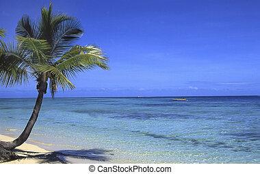 Fiji, coconut palm and south sea
