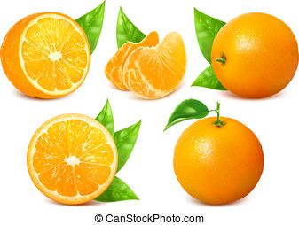 Fresh ripe oranges with leaves. - Vector collection of fresh...