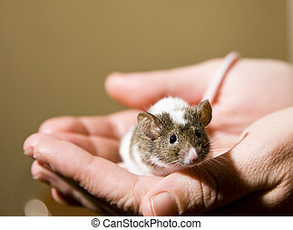 Little mouse - Qute little mouse in the hands of a human