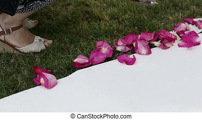Rose petals on white road - Unfolding rose petals on white...