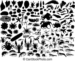vector mollusks - Big vector collection of different...