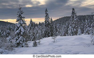 Winter in the Black Forest in Germany