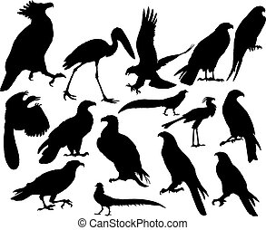 vector birds - Vector illustrations black silhouettes birds...