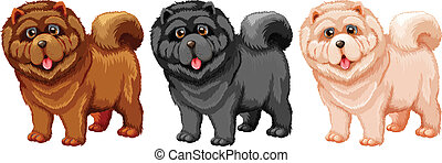 Chow Chow - Illustration of a set of chow chow
