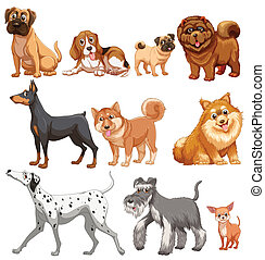 Dogs - Illustration of different kind of dogs