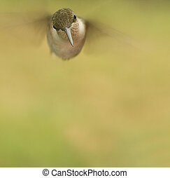 menekülés, Kolibri