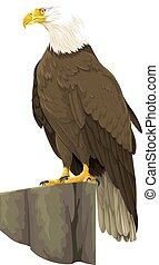 Vector of bald eagle. - Vector illustration of bald eagle.