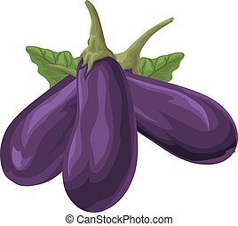 Vector of fresh brinjal - Vector illustration of fresh...
