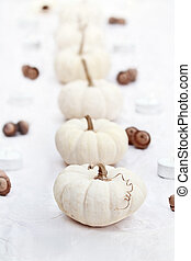 White Pumpkins in a Row - Beautiful table decorations of...