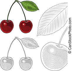 Sour cherry with leaf