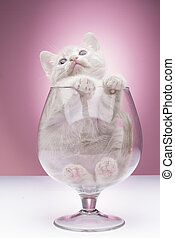 Little funny kitten - Funny kitten in studio on a pink...