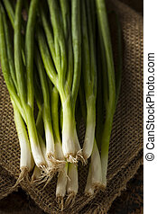 Organic Healthy Green Onion on a Background