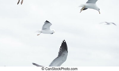 Seagull in flights