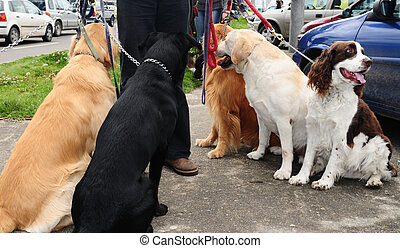 Dogs - Dog walker with pets
