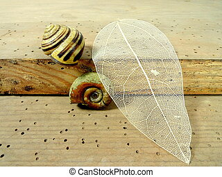 naturals - two snails and a leaf on a old board