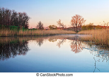 Morning landscape with reeds in the pond