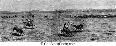 Herds in the distance The lasso, vintage engraving - Herds...