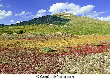 Alpine tundra in autumn colors