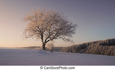 Cold Winter - Winter in the Black Forest in Germany