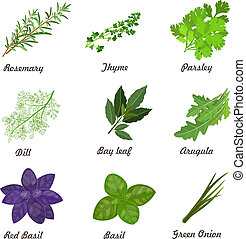 collection of herbs for you design