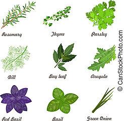 collezione, erbe, lei, disegno