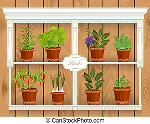 shelfs with collection of herbs in a flowerpots at market