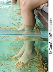 Fish Spa Skin Therapy - Fish Spa for foot Skin Therapy