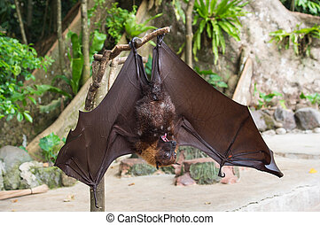 Bat hanging upside down and spread wings