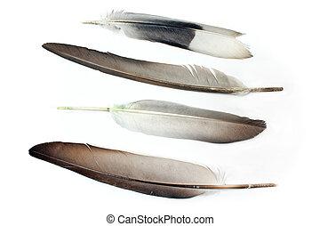 plumas, aislado, blanco