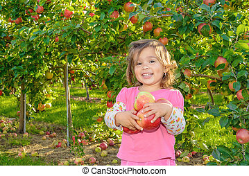 Cute little girl in the garden with apples Annapolis Valley,...