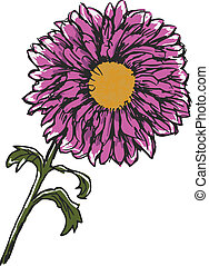 chrysanthemum - hand drawn, sketch illustration of...