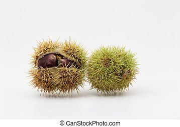 chestnuts - in close up there is a lot of chestnuts on white