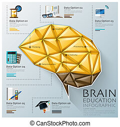 Brain Shape Three Dimension Polygon Education Infographic...